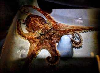 octopus2015_R