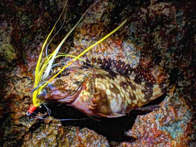 rockfish0416_R